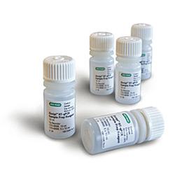 Reagente P/ Preparacao De Amostras Para Rt-Qpcr