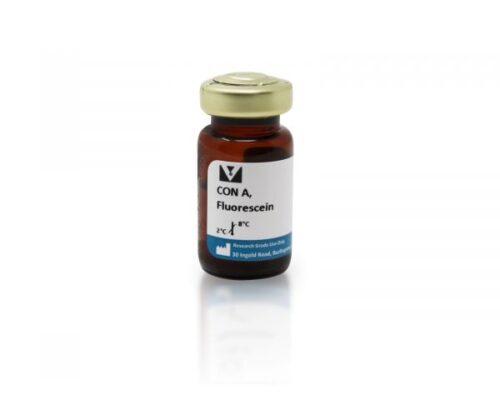 Concanavalina  A (Con A) Marcado Com Fluoresceina -Fr/25Mg