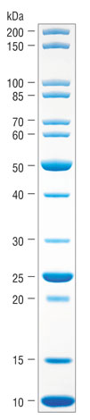 Padrao De Proteina Nao Corado