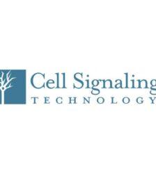Anticorpos - Anticorpos - Cell Signaling